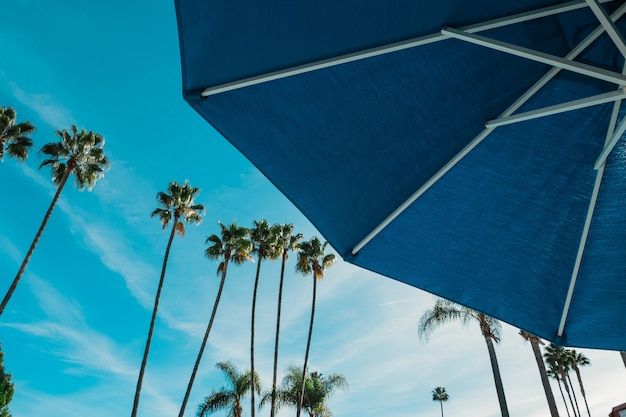 Low angle of a blue umbrella with the tall palm trees