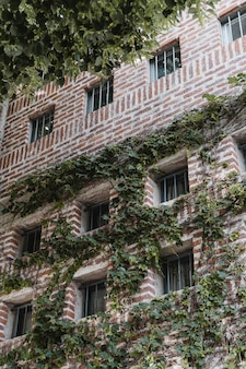Low angle of building in the city covered in vines