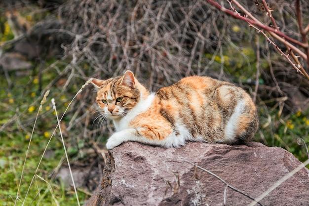 自然の中の巨大な石の上に座って誰かを見ている愛らしい黄色い猫のローアングルの接写