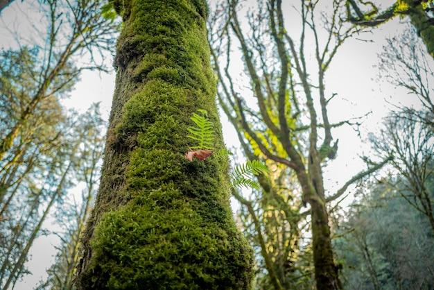 캐나다 숲 한가운데 있는 아름다운 녹색 풍경의 낮은 각도 근접 촬영