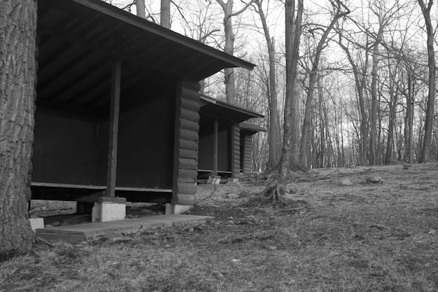 森の真ん中に並んでいる空の小屋のローアングルグレースケールショット