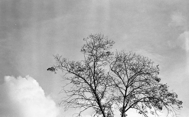 Inquadratura dal basso in scala di grigi di un bellissimo albero sotto le nuvole nel cielo