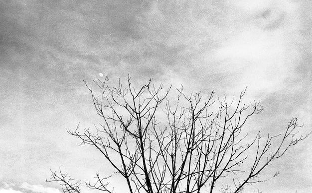 Inquadratura dal basso in scala di grigi di un albero secco sotto il cielo nuvoloso