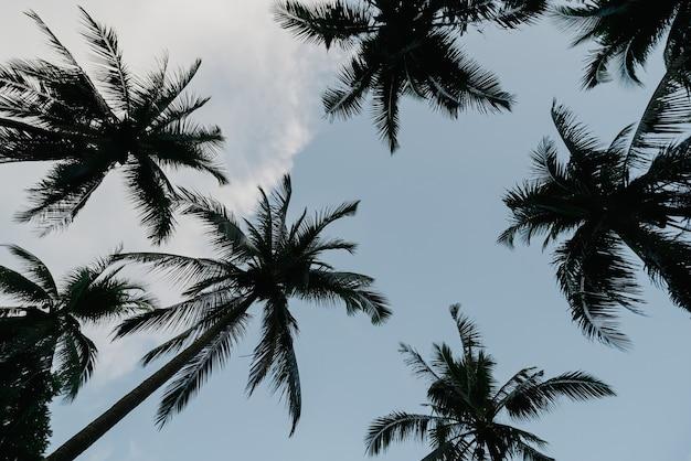 낮은 각도 그림자와 함께 하늘을 올려다 코코넛 나무의 실루엣