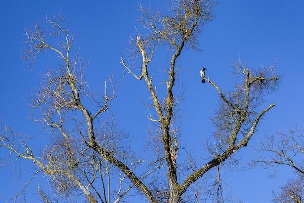 クロアチア、ザグレブのマクシミール公園の木の枝で休んでいるカラスの鳥の低角度