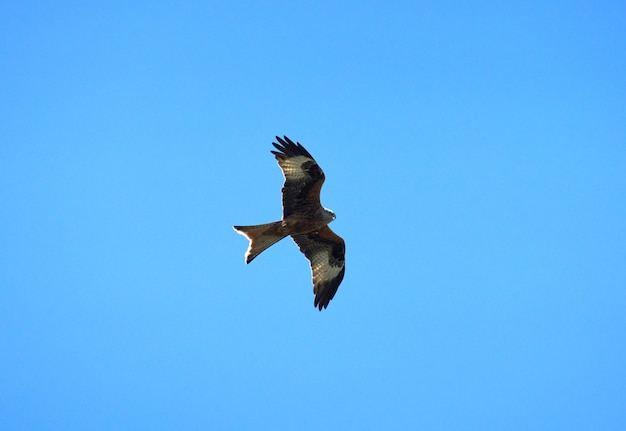 맑고 푸른 하늘을 배경으로 날아가는 붉은 연 새의 낮은 각도