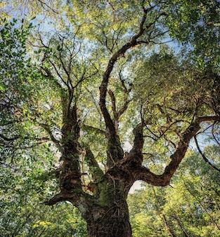 国立公園の熱帯雨林の枝と日光と大きな緑の木の低角度