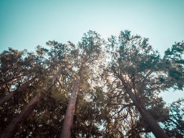 Фото высоких деревьев под низким углом