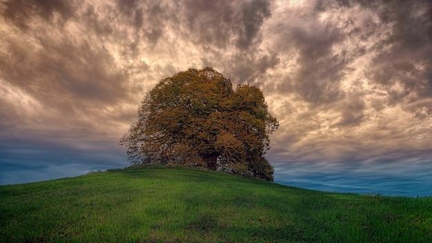 갈색 잎이 많은 나무의 낮은 각도 사진