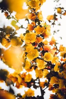 黄色い花びらの花のローアングル写真