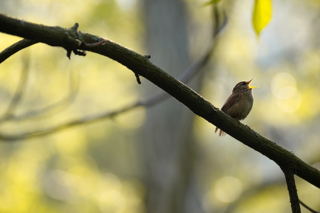 Inquadratura dal basso del fuoco selettivo di un uccello esotico sul ramo di un albero
