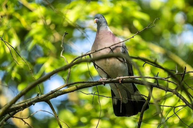 Inquadratura dal basso del fuoco selettivo di un piccione seduto sul ramo con vegetazione sullo sfondo