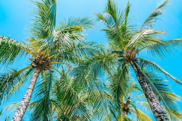 Low angle shot of beautiful coconut palm tree on blue sky