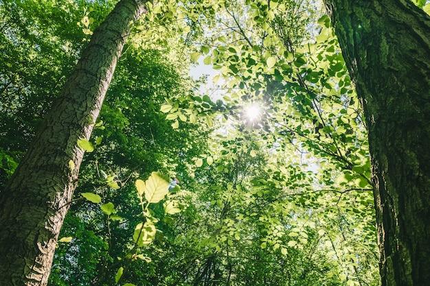 Inquadratura dal basso di bellissimi alberi a foglia verde sotto un cielo luminoso