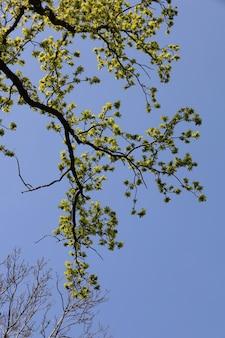 Inquadratura dal basso di un ramo con foglie verdi contro il cielo