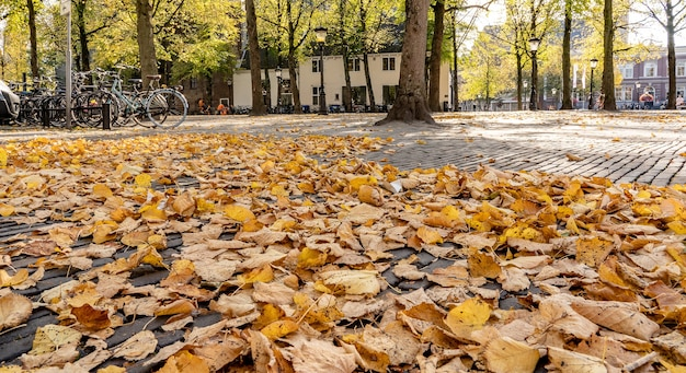 Low angle shot of a building next to a set of bicycles surrounded by trees and dry leaves