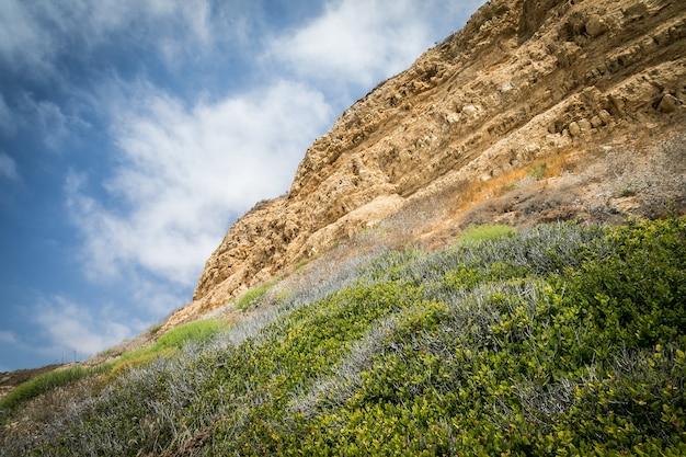 Inquadratura dal basso di piante verdi che crescono su una montagna rocciosa con un cielo nuvoloso