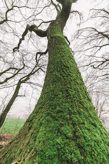 Low angle shot of a huge tree in the forest with a gloomy sky