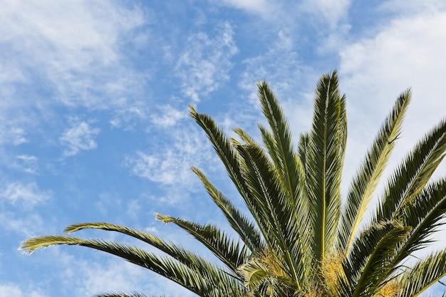 Inquadratura dal basso di una magnifica palma sotto le nuvole nel cielo blu