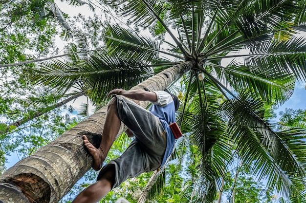 Low angle shot of a male climbing a tall palm tree