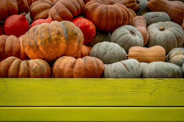 Low angle shot of many colorful pumpkins filled in a green wooden box