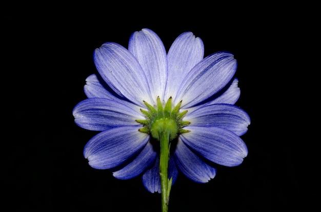 블랙에 고립 된 아름 다운 보라색 꽃의 낮은 각도 샷