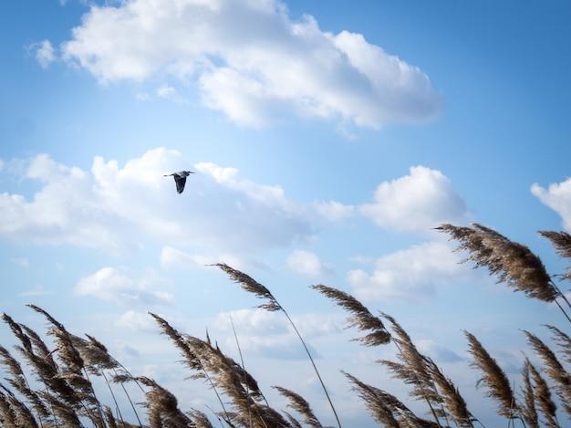낮에는 흐린 하늘 아래에서 날아 다니는 새의 낮은 각도 샷