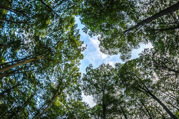 푸른 흐린 하늘과 나무로 가득한 숲의 낮은 각도 샷