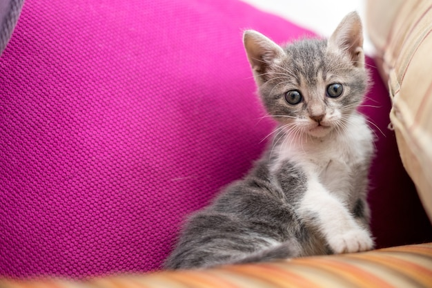 Снимок милого котенка, сидящего на диване под низким углом
