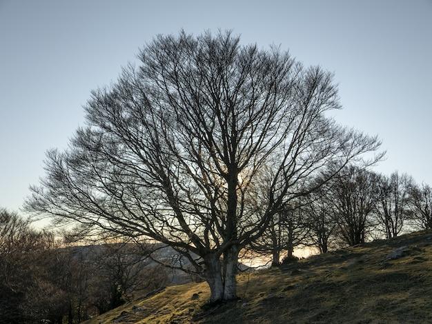 澄んだ空の下で裸の木でいっぱいの丘の上のフィールドのローアングルショット