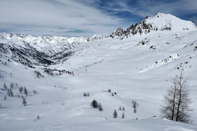 푸른 하늘 아래 눈과 경로로 덮여 숲이 우거진 산의 낮은 각도 샷
