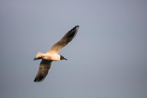 笑うカモメのローアングルショットが空を飛ぶ