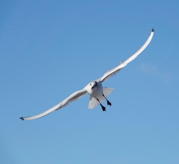 Снимок чайки в небе под низким углом
