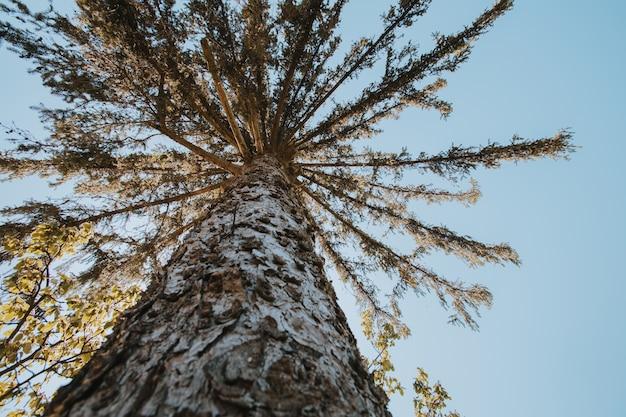 日光の下で森の中の背の高い木のローアングルショット