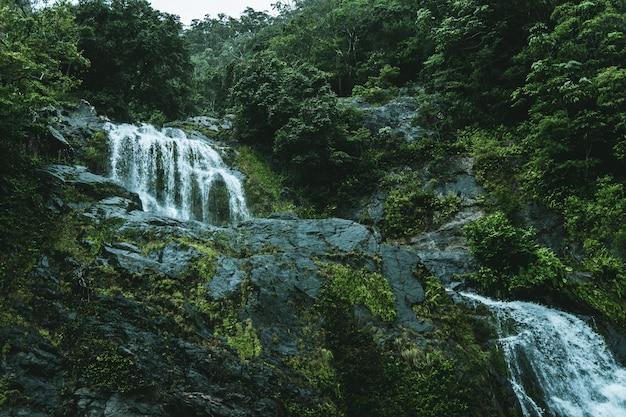 緑の森の真ん中にある滝のローアングルショット
