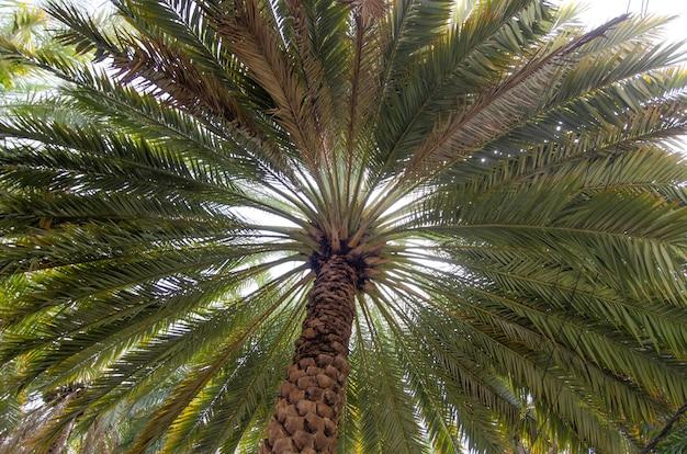 幅の広い背の高い緑のヤシの木のローアングルショット
