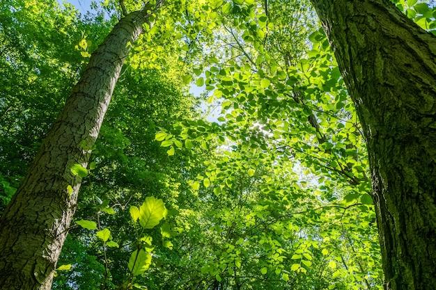 밝은 하늘 아래 아름다운 녹색 잎이 많은 나무의 낮은 각도 샷