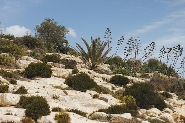 日光の下で岩にさまざまな植物のローアングルショット