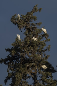 日没時の白鷺のローアングルショット