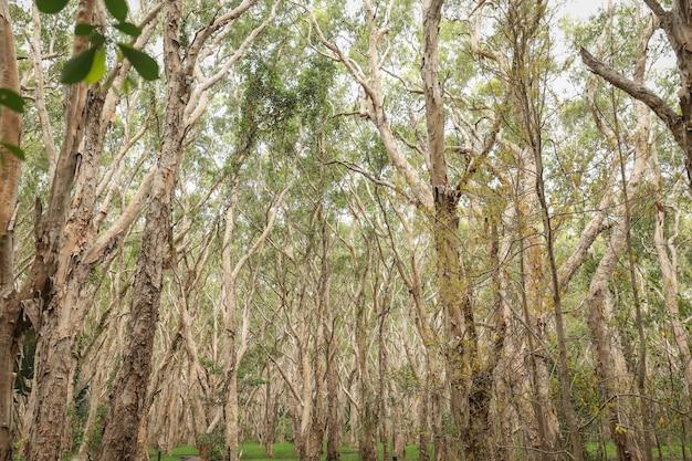 森の中の裸の背の高い木のローアングルショット