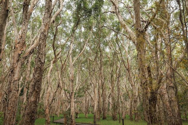 숲에서 반 벌거 벗은 키가 큰 나무의 낮은 각도 샷