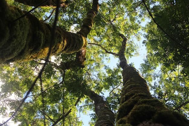 澄んだ空の下で緑の葉と高い木のローアングルショット