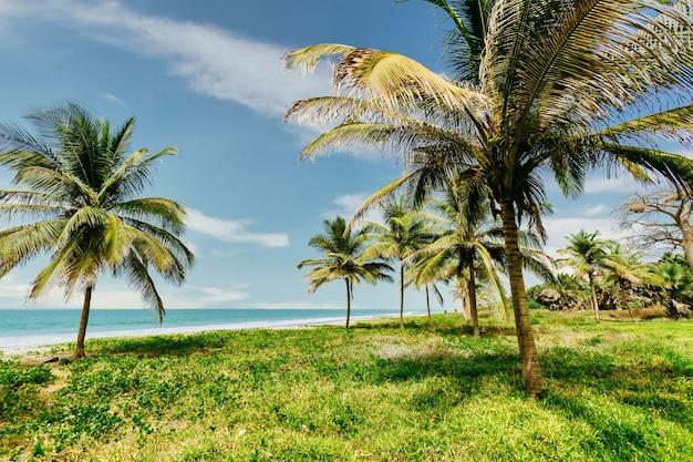 Снимок под низким углом пальм, окруженных зеленью и морем под синим облачным небом