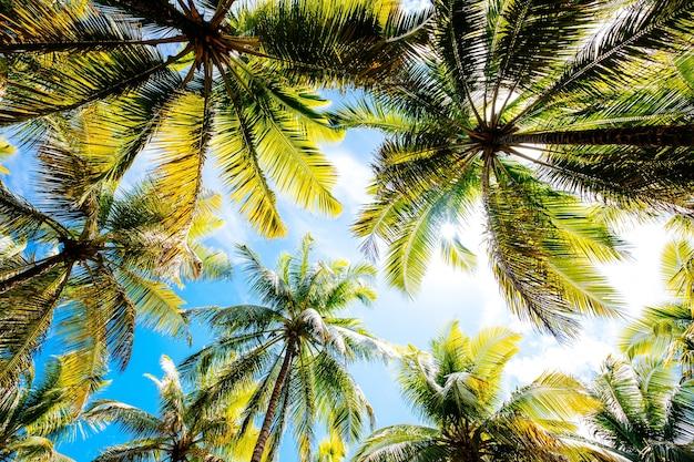 青い曇り空の下でのヤシの木のローアングルショット