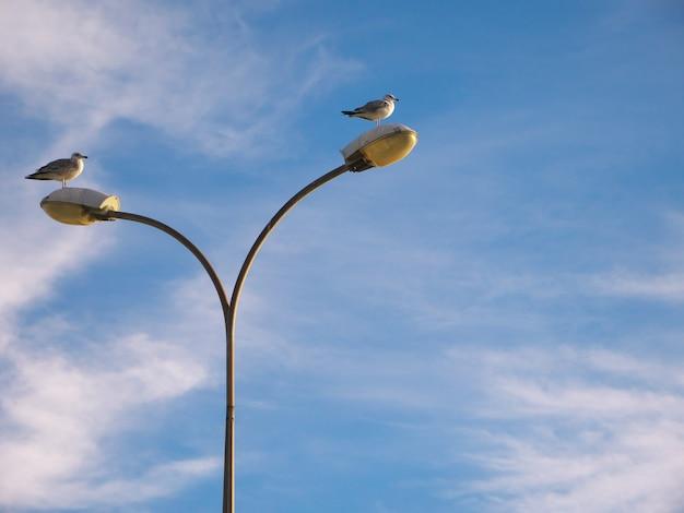 푸른 하늘 아래 가로등에 앉은 갈매기의 낮은 각도 샷