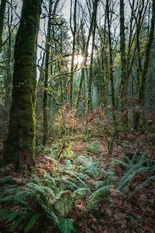 カナダの高層の木々と緑の風景の上の日の出のローアングルショット