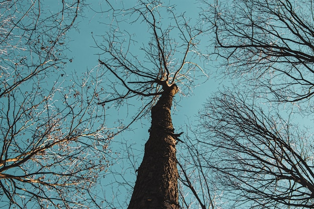 昼間の青い空を背景に背の高い木のローアングルショット