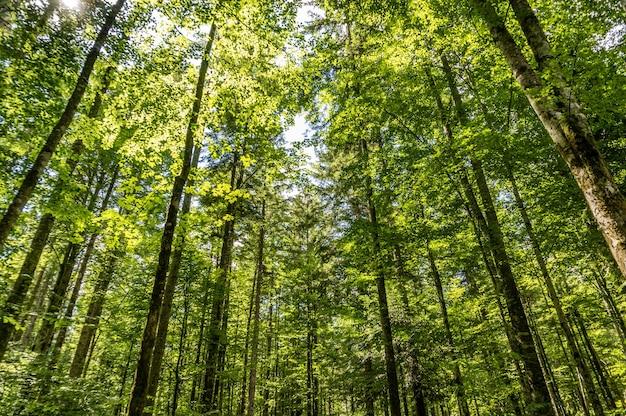 맑은 날에 숲에서 키 큰 나무의 낮은 각도 샷