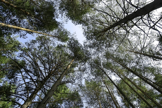 明るい空の下で緑の葉を持つ美しい背の高い木のローアングルショット