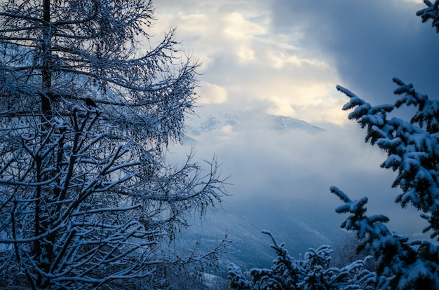 雪に覆われた白い森の上の美しい冬の空のローアングルショット